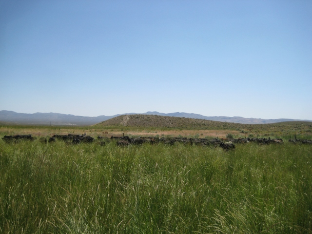 Ah, the beautiful sight of a tall, grassy meadow with cows and desert in the background. It doesn't get much prettier than this, unless it's a new full-flower carved Tip's saddle, my baby's smile or my wedding ring.